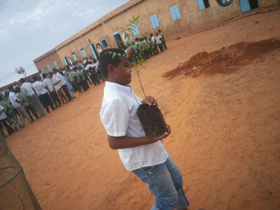 A student planting one of the donated seedlings